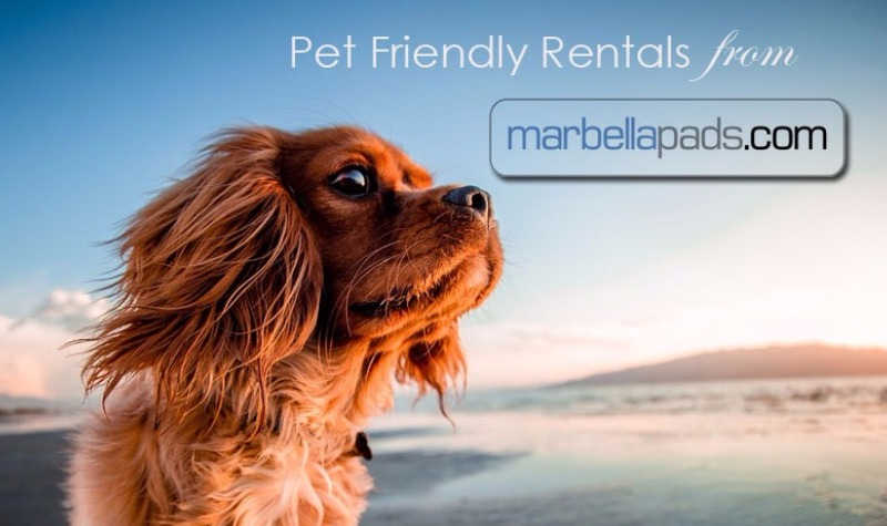 Pet Friendly Long Term Rentals Marbella Costa del Sol